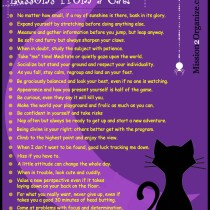 Lessons From a Cat!