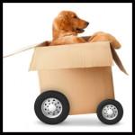 move-management-tip-19